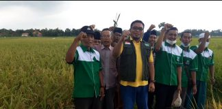 Pengurus Wilayah dan Cabang LPPNU saat melihat Varietas Padi Unggul NU di Kabupaten Sampang, Madura